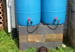 BMP Rain Barrel for Stormwater management and watersheds