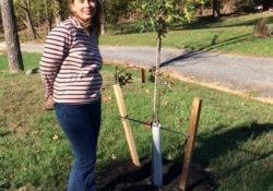 BMP Tree Planting for Stormwater management and watersheds